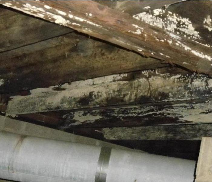 Crawlspace Needing Mold Remediation Before