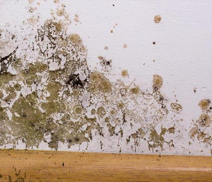 Mold Remediation Identifying Mold: How To Know When Black Mold Has Invaded Your Home
