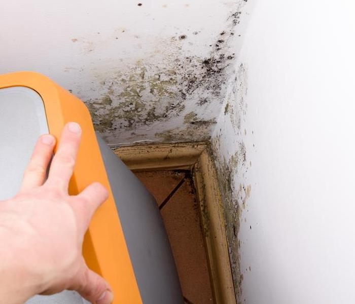 Mold Remediation Take These 5 Proactive Steps To Prevent Mold in Your Rental Home